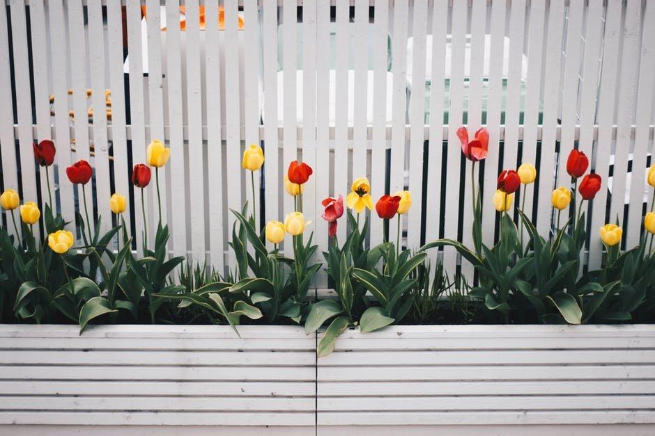 Thiết kế hàng rào cho sân vườn