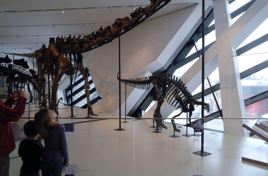Sảnh chính được tận dụng để trưng bày những bộ xương khủng long